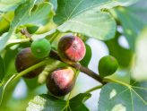 Кога сме призвани да даваме плод?